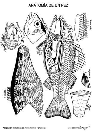 Recortables anatomía vertebrados