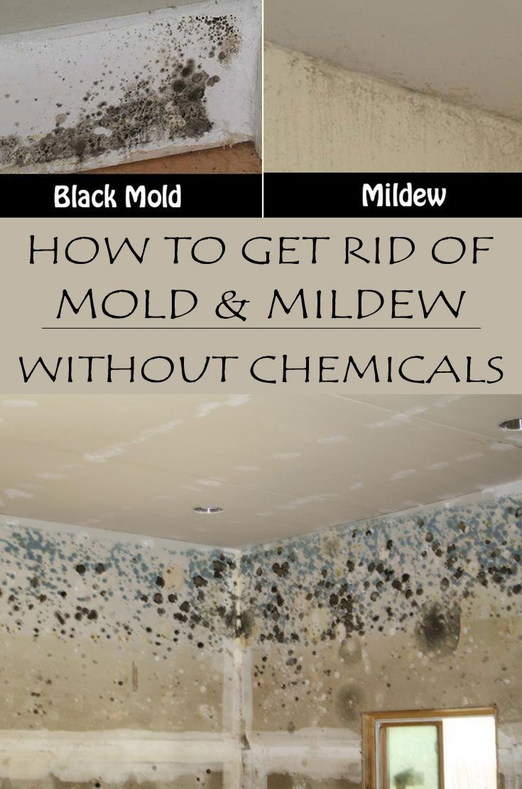 how to get rid of mold under your house