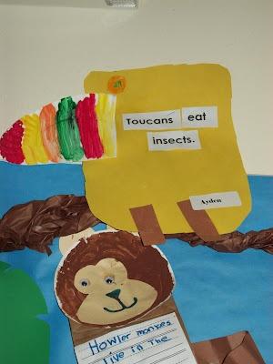 toucansRainforests United, Kindergarten Blogs, Rainforests Theme