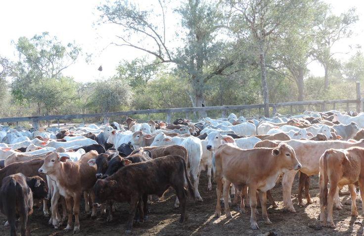 Paraguay initiiert eine Diskussionsrunde für Rindfleisch, sucht neue Märkte