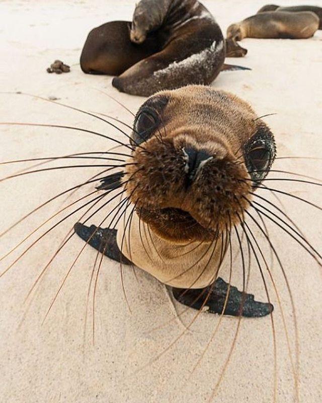 Erstaunliche süße Robbenbabys am Strand! Seehundbaby, Am Strand, Robben, Am Strand   – babies