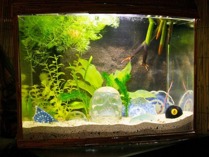 Best 25 fish tank decoration ideas ideas on pinterest for Aquarium decoration ideas freshwater
