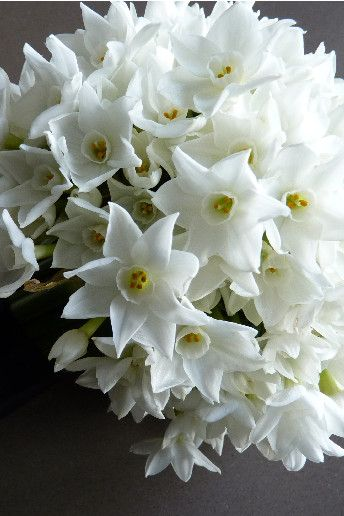 Wonderfully scented paper whites! Perfect for a Spring Wedding  Wedding Magazine - Top10: spring wedding flowers