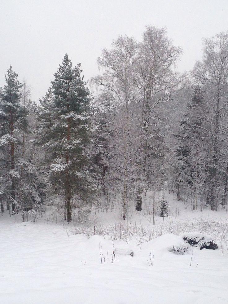 Snødekt skog på vinteren.