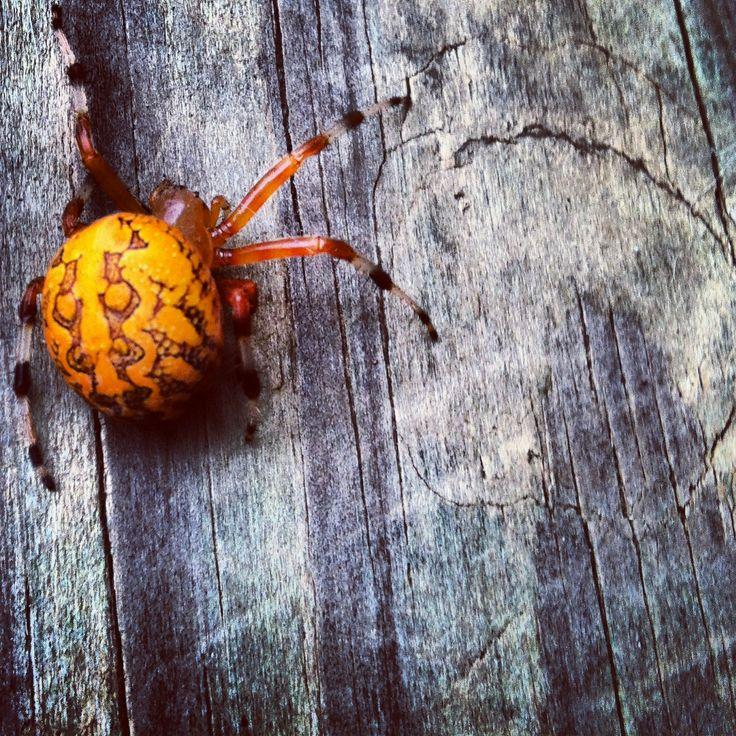 Bright Orange Spider Animals Pinterest