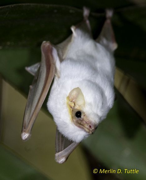 Halloween PSA: More Bat Species Appearing On Endangered List, And Here's Why It Matters
