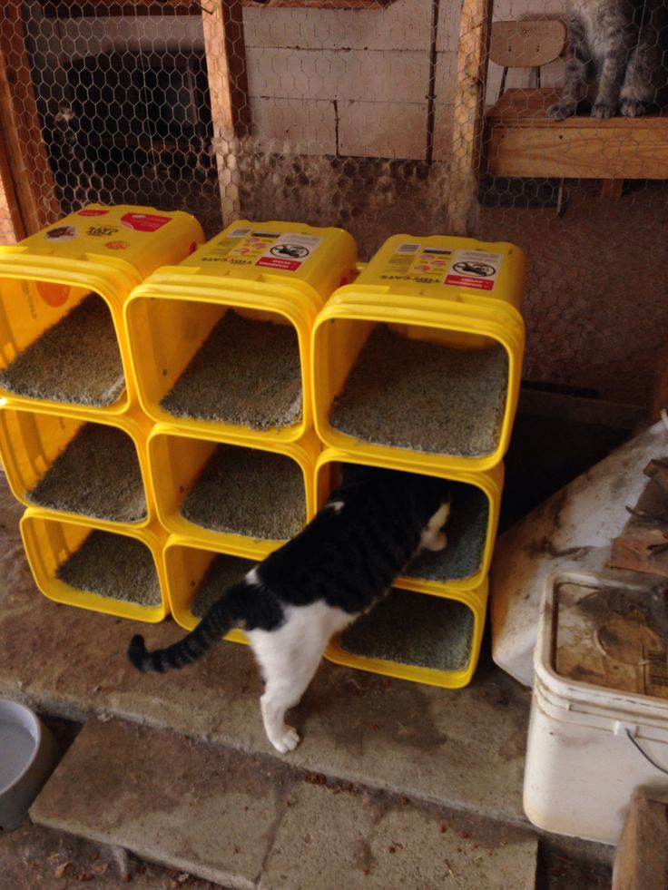 Cat condo in use! Made from tidy cat bucket! ★ More on #cats - Get Ozzi Cat Magazine here >> http://OzziCat.com.au ★