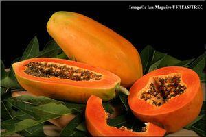 パパイア / papaya
