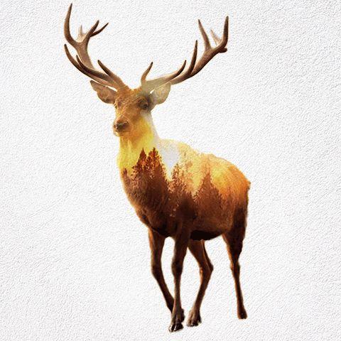 GIFs de animais selvagens e suas casas destruidas - Assuntos Criativos