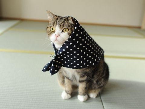 Maru the cat (まる 猫)