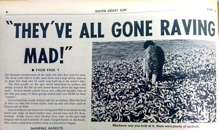 #ThrowBackThursday - Sardine Fever - Seventies Style!  Read more about the best ever KZN South Coast sardine run in 1971 https://www.facebook.com/WhereToStay/photos/a.367097773363022.83955.139103176162484/1683219255084194/?type=3&theater