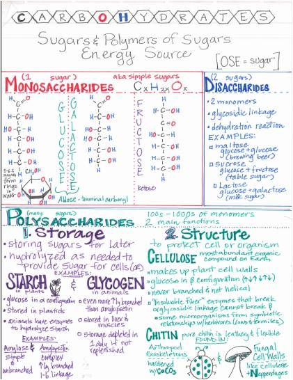 Finally!  I have had this Carbohydrate Summary Sheet completed since mid summer, and I finally scanned it in.         If you would like a di...