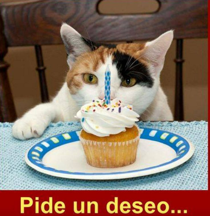 25 Best Images About Gatos Cumpleaños On Pinterest