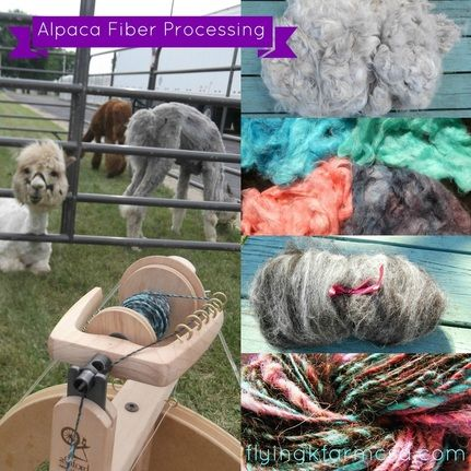 Ever wonder how to process Alpaca Fiber? We are doing a series of post walking you through all the steps.