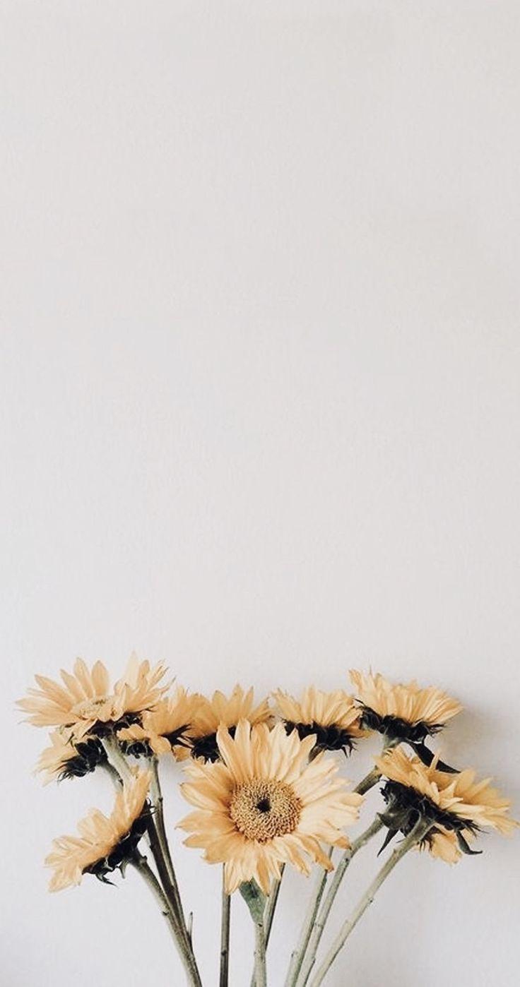 Blumen Sonnenschein