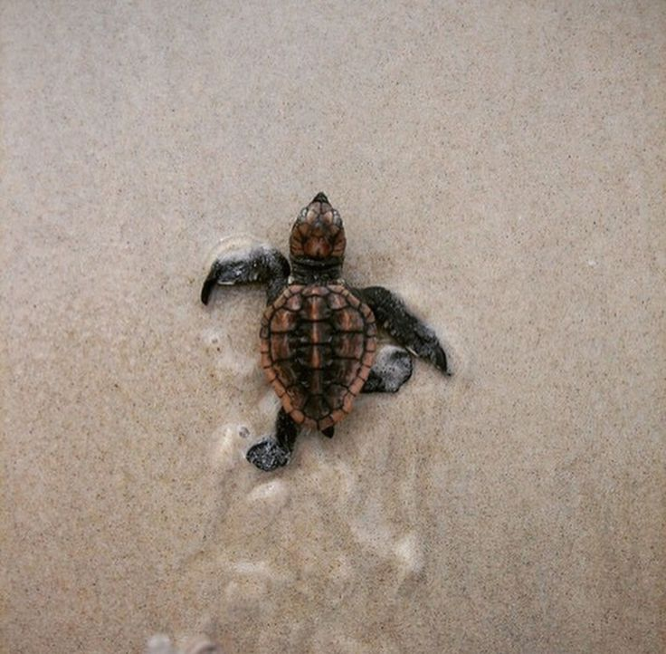 Baby Sea Turtle : That Kind Of Woman