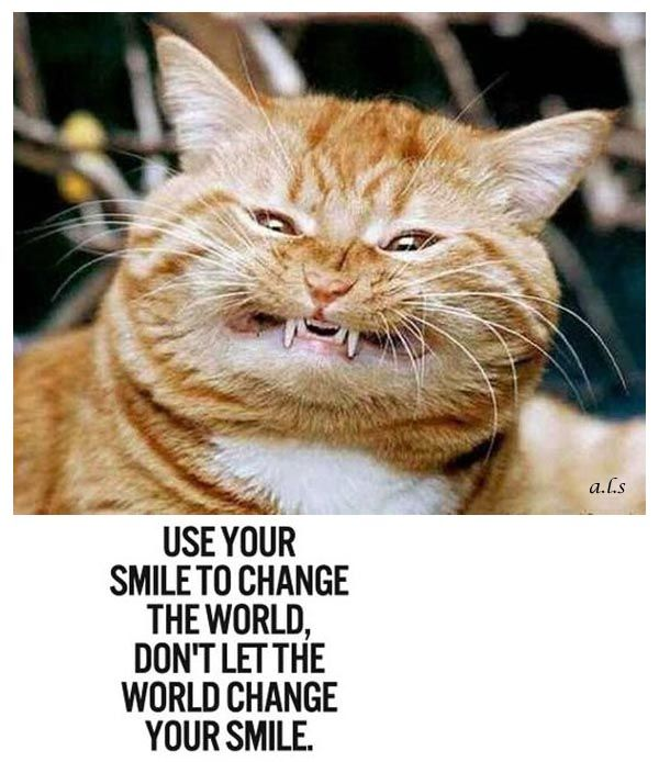 smile....  www.facebook.com/KittysFunnies