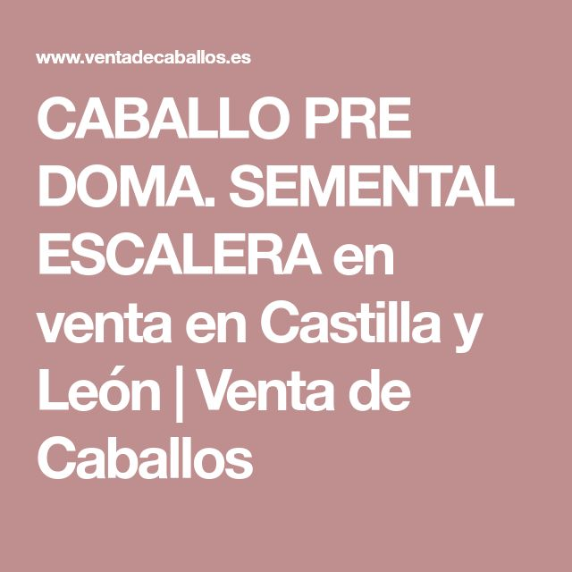 CABALLO PRE DOMA. SEMENTAL ESCALERA en venta en Castilla y León   Venta de Caballos