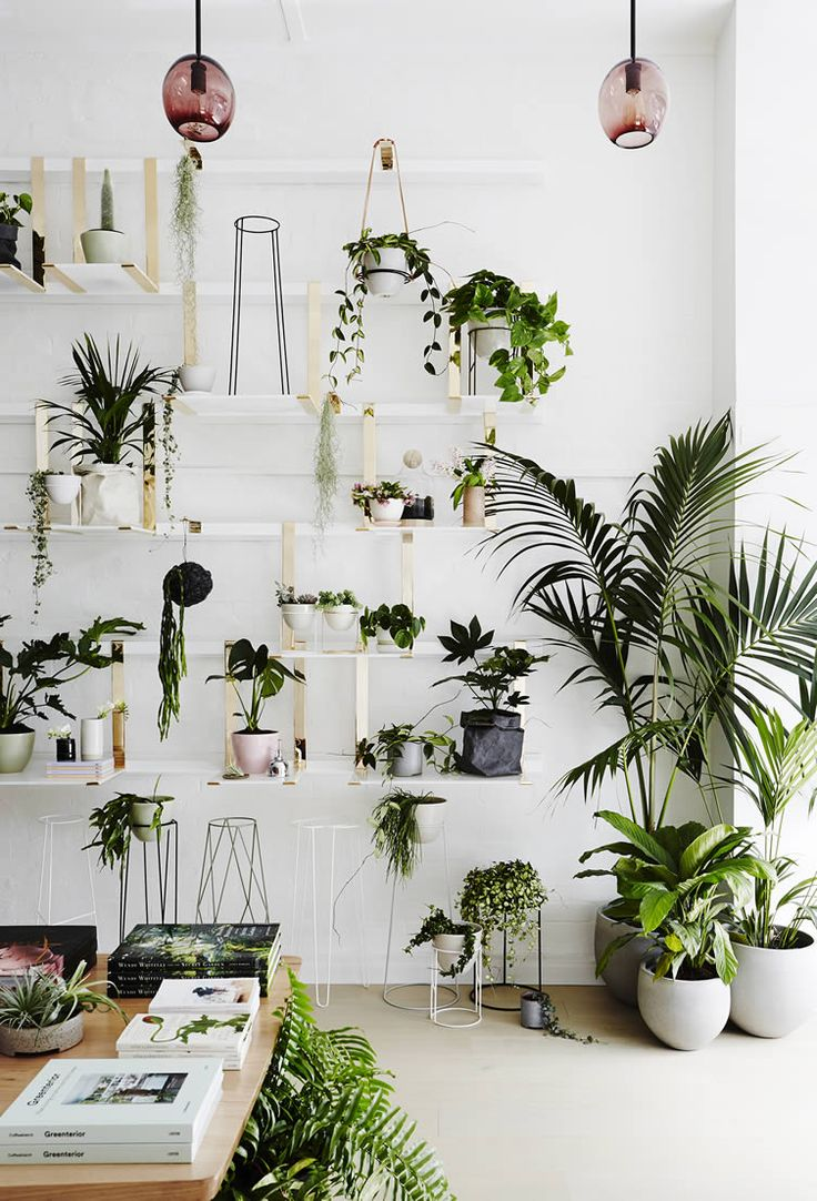 greenery is elevated to an art form at ivy museu0027s melbourne homage to all - Office Plants