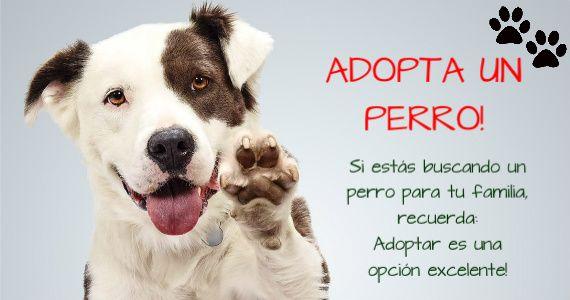 Adopta un perro y gana un amigo fiel para siempre!