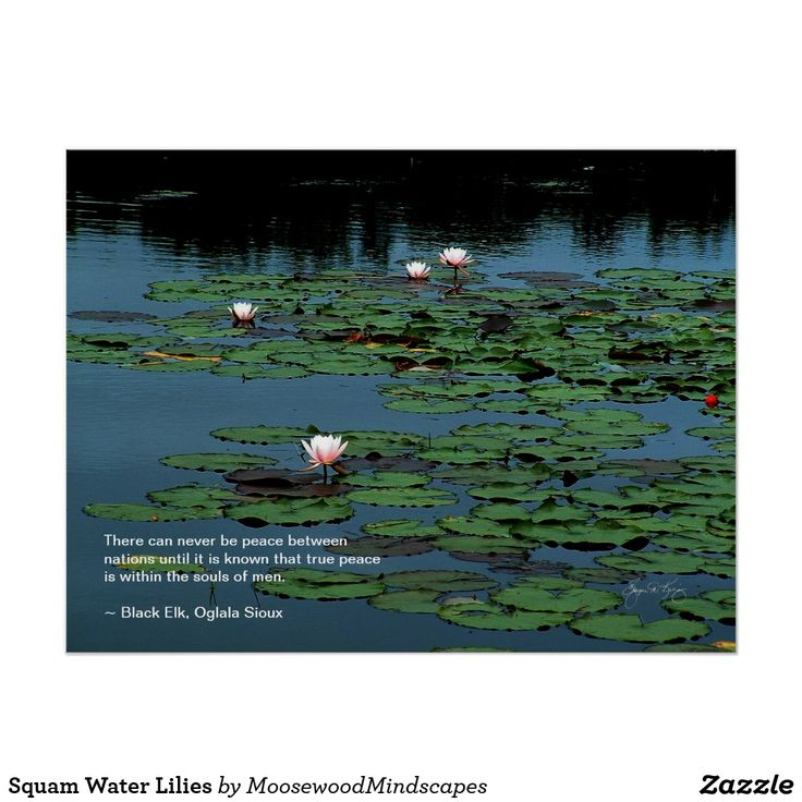 Squam Water Lilies Poster
