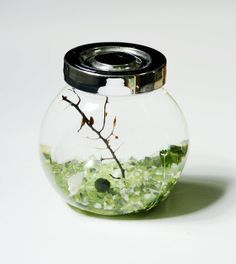 Marimo moss ball terrarium. It includes a sea fan, a marimo ball, white gravels, green glass gravels and some shells    Marimo ball is a type of algae, and it is easy to care. Just keep it in tap water and change the water every two weeks.     Japanese believe marimo balls will bring good luck to you.     Container size:     Height: 8.5 cm (3.3 inches)     Top diameter: 5 cm (1.9 inches)    Bottom diameter is 4.5 cm (1.8 inches)    Widest part: 7.5 cm (3.9 inches)       Any questions, please…
