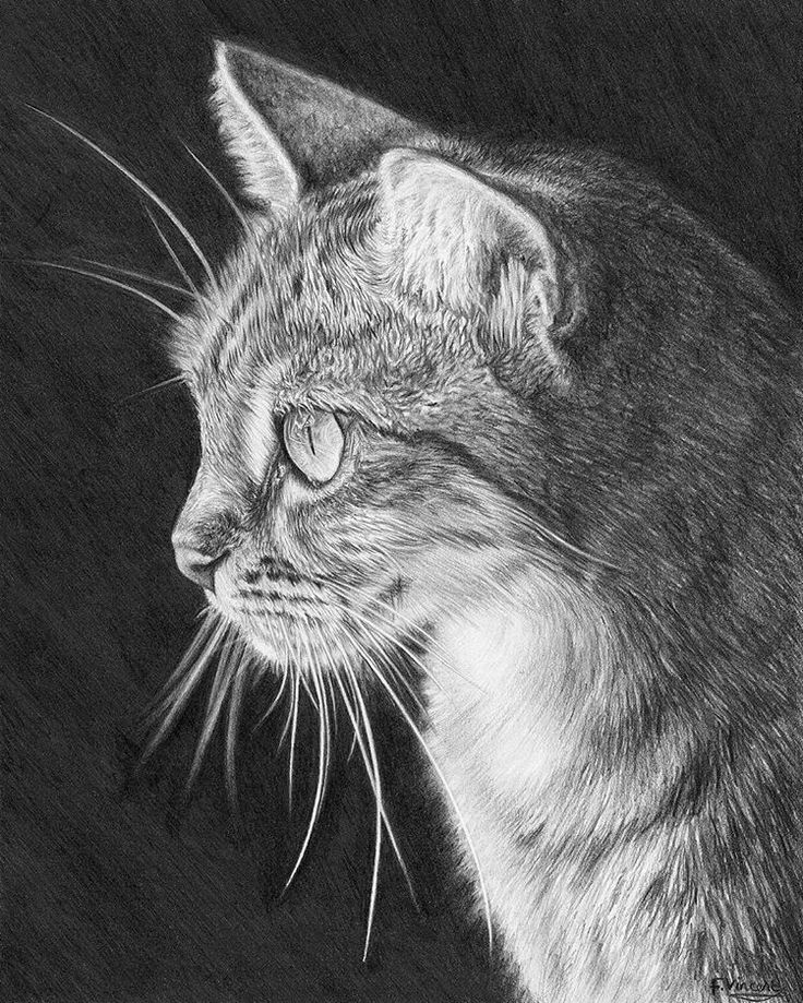 'Line of sight' drawn and sold mid 2016. This is one of my favourites as I love how the cat stands out from the page because of the dark background :) hope you like 👍✏ #catdrawing #catart #catlover #catowner #cat #cats #animalart #beautifulcat #drawing #pencilart #art #pencil #graphite #animalartist #animaldrawing #loveart #supportart #beautifulanimals #drawingskills #lovecats #beautifulcat #cutecat #pencilart #animalartist #catartist #petartist #monochrome #blackandwhite #mydrawing…
