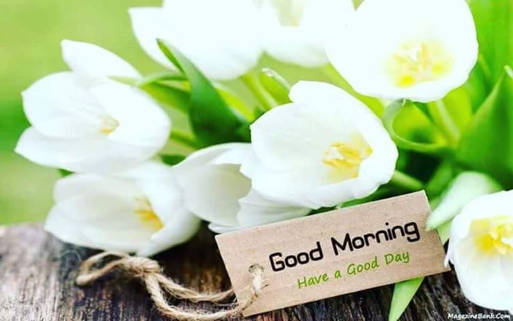 Assalamualaikum dan Selamat pagi..  mudahan apa yang anda inginkan dan lakukan hari ni dipermudahkan dan diberkati oleh-Nya