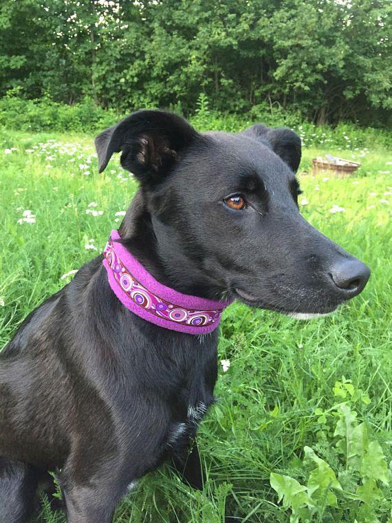Fleece padded dog collar sports dog agility comfy martingale