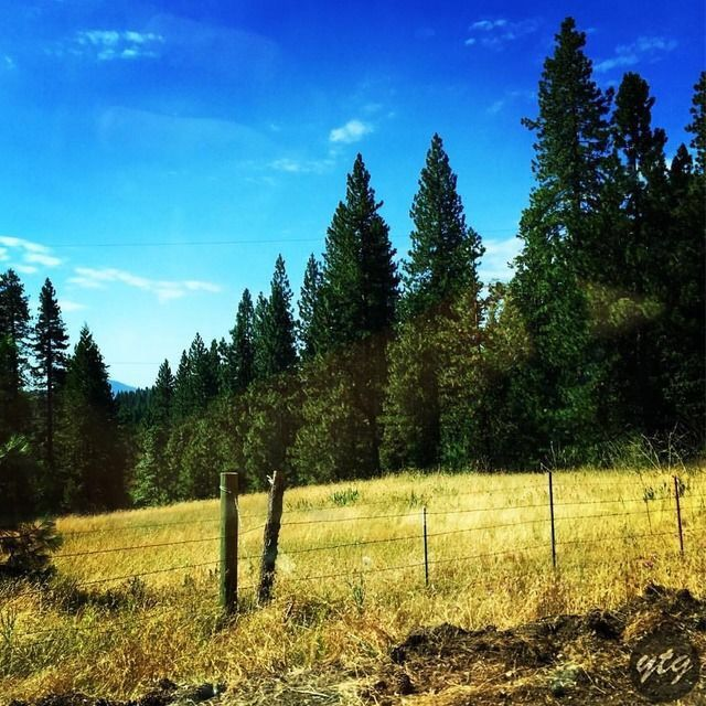On the road again 🚗 📍 Sierra National Forest https://youtu.be/SykqdL069VQ  #adventure #nature #photography #travel #blog #roadtrip #tree #america