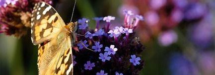 La nature en fête du 21 au 25 mai...Découvrez le programme près de chez vous - Ministère du Développement durable