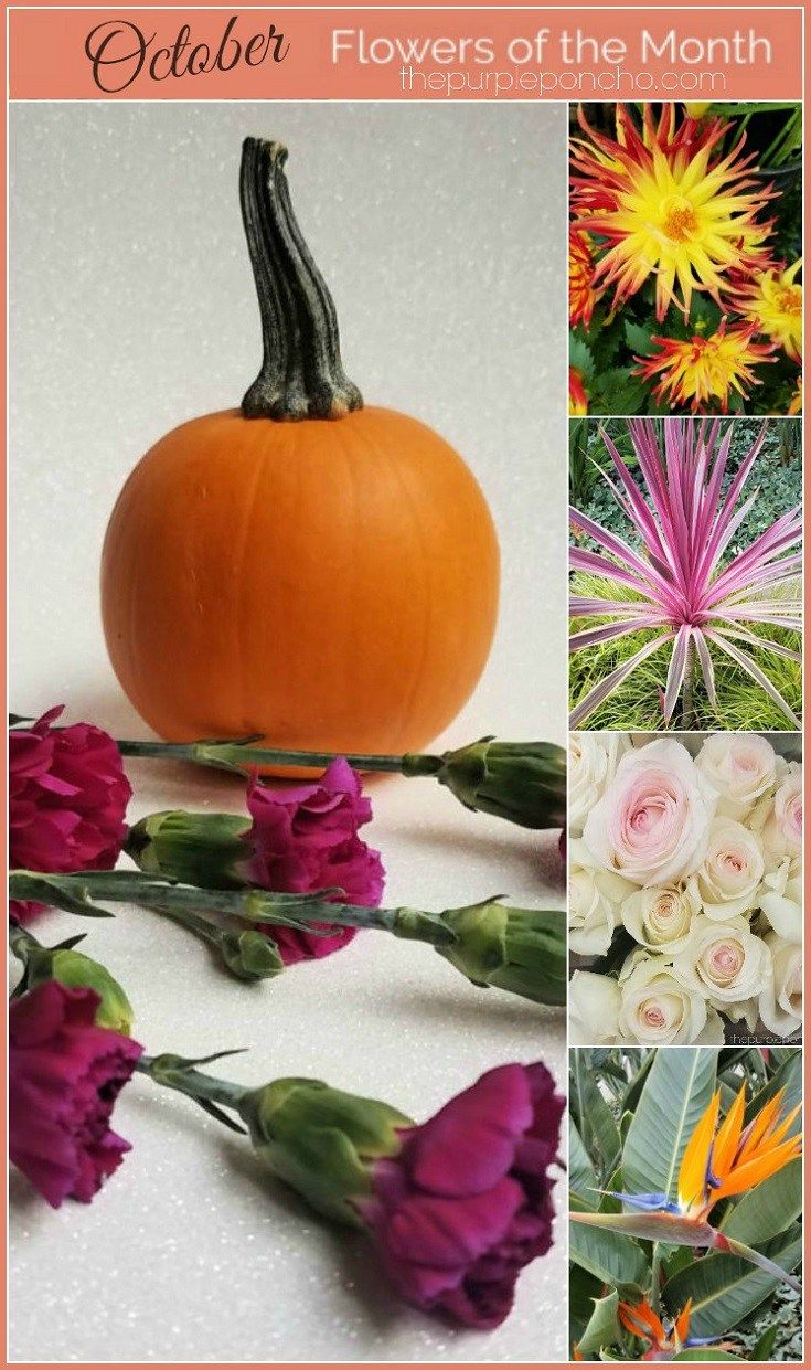Flowers Of The Month October Flower Power October Flowers