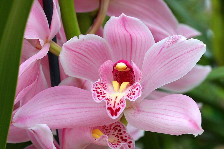 Todo Flores de Porcelana Fria: Orquidea Cymbidium Paso a paso