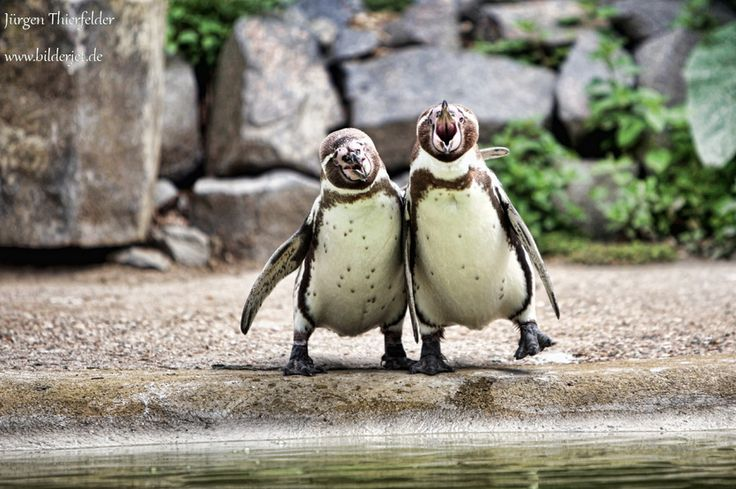 hey bro: Happy Hour, Penguins Buddy, Happy Guys, Bff S, Penguins Pals, Bffs, Photography Art Etc, Happy Friends, Feathers Friends