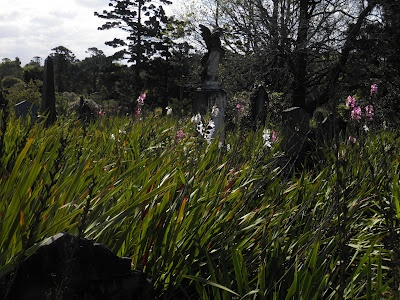 Rookwood cemetery has become overgrown and a site of environmental conservation in some spots.  There are some rare and endangered plants which have survived Sydney hidden here.