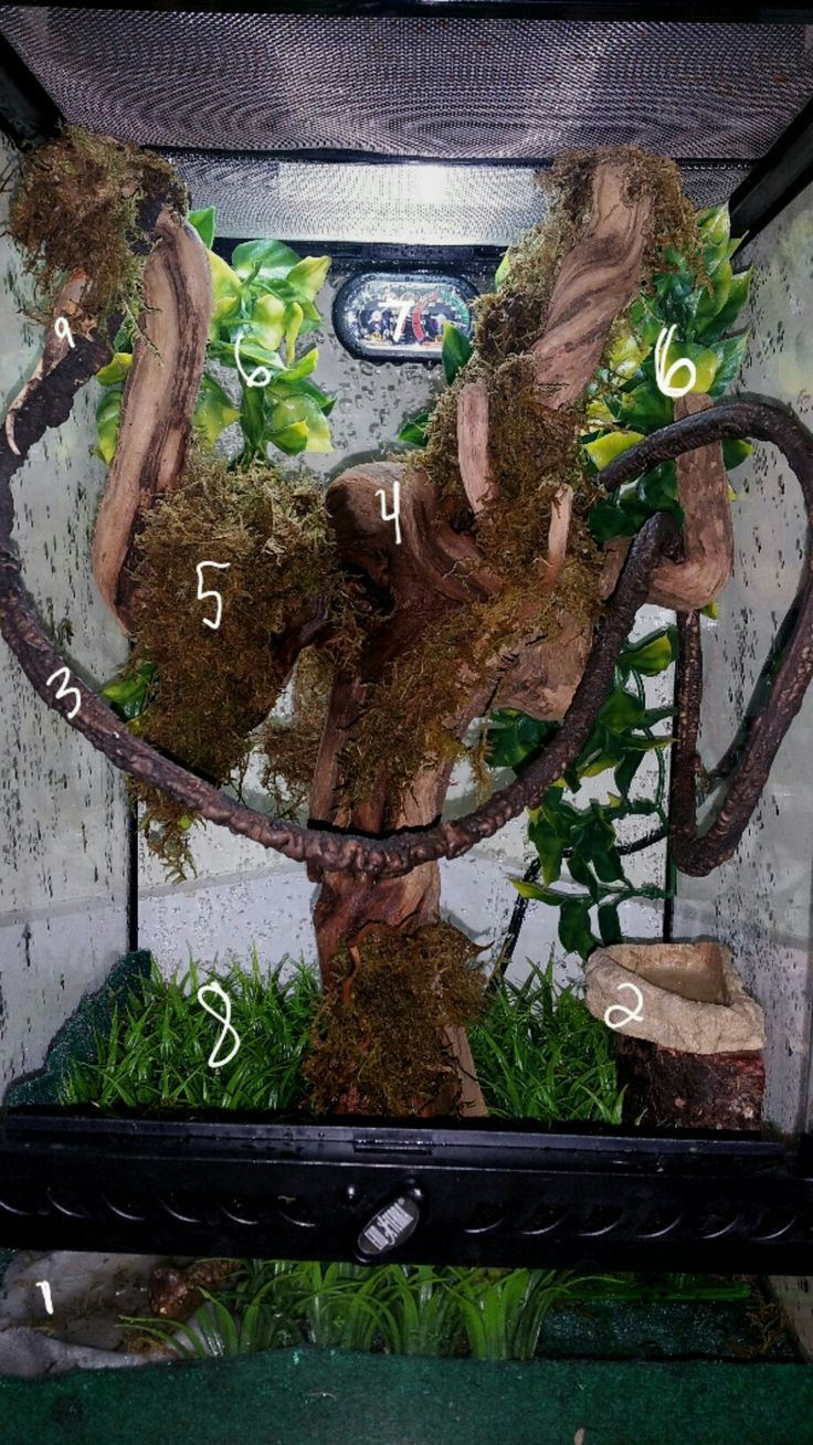 Setting up a crested gecko tank?  1. Water Dish 2. Food Dish  3. Vines for climbing  4. Driftwood *long enough to go from the bottom to the top* 5. Terrarium Moss *avoid dyed mosses* 6. Jungle Vines *Great for hiding and climbing* 7. Thermometer/ Hygrometer **DAY- 72°-80°/ 60% NIGHT- Lower 70s/ 90%** 8. Faux Grass *great for hiding and climbing* 9. Last but not least,  your crested gecko!