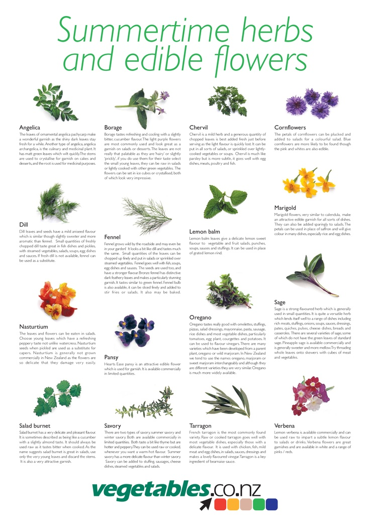 Herbs and edible flowers | Master Cooks Corps | Pinterest ...