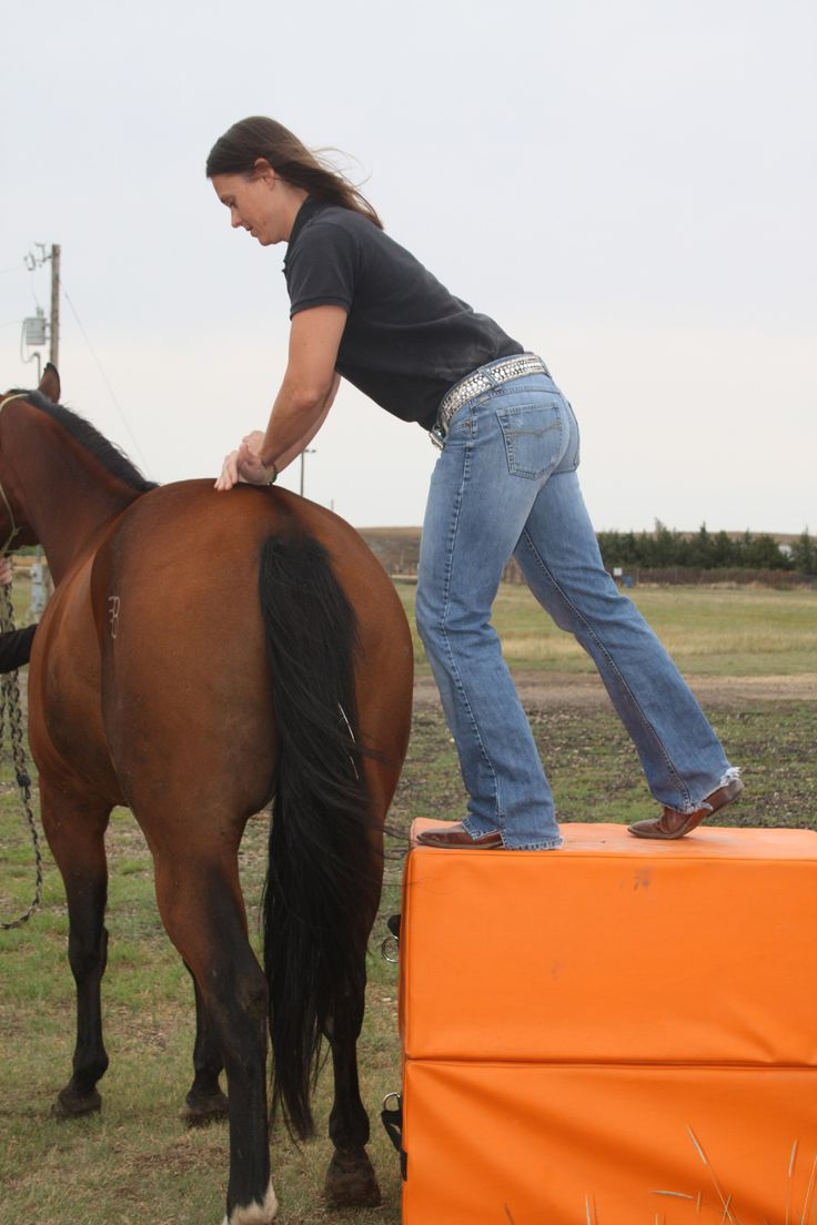Chiropractic helps athletes, and your horse is no different!