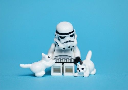Stormtrooper meets kitty.
