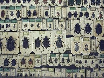Museum Insects at the Melbourne Museum. I dream to have my own little 'museum' with a collection like this!