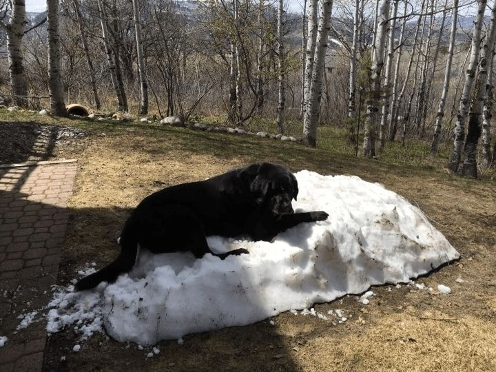 This Hilarious Dog Is Having A Hard Time Letting Go Of Winter. - http://www.lifebuzz.com/winter-dog/