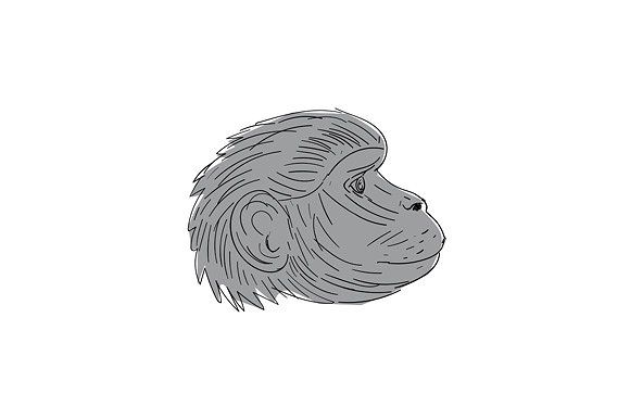 Gelada Monkey Head Side Drawing by patrimonio on @creativemarket. Illustration of a Gelada Monkey Head Side view done in Drawing sketch style. #illustration  #GeladaMonkeyHead