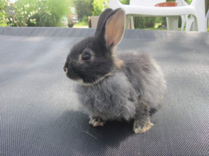 les 12 meilleures images propos de lapins sur pinterest animaux croquis et blog. Black Bedroom Furniture Sets. Home Design Ideas