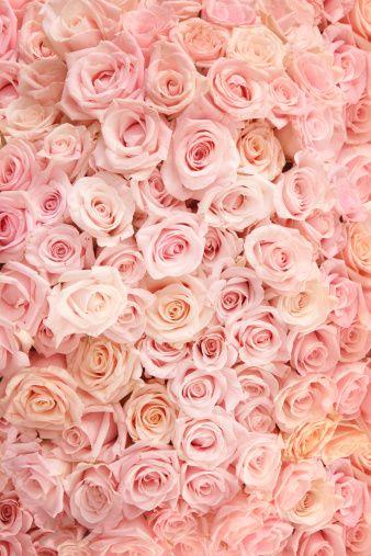 タイトル『Pink Roses - 15fc8』のスマホ用無料壁紙です。関連キーワード:「愛」「ロマンス」「縦長」「フルフレーム」「ピンク色」「花」。