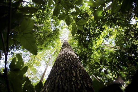Perto de completar cinco anos, Código Florestal ainda tem pontos a implementar - Quase cinco anos depois de sua aprovação, o Código Florestal (Lei 12.651/2012) ainda não foi totalmente implementado. Organizações ambientais avaliam que, dos 14 pontos do novo código que elas consideram prioritários, apenas a inscrição de propriedades rurais no Sistema Nacional de Cadastro - http://acontecebotucatu.com.br/nacionais/perto-de-completar-cinco-anos-codigo-florestal-ainda-