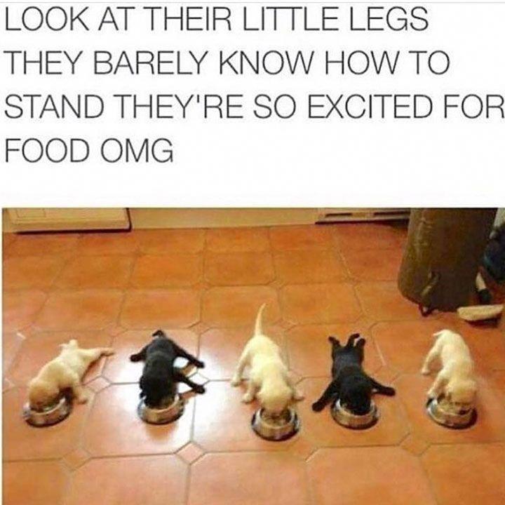 30 Hilarious Animal Memes #funnydogvideos #CuteAnimals