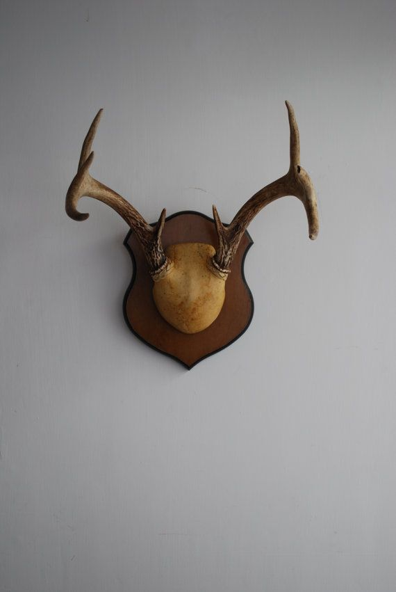 Vintage Deer Antler Mount Taxidermy Bone Braided Leather