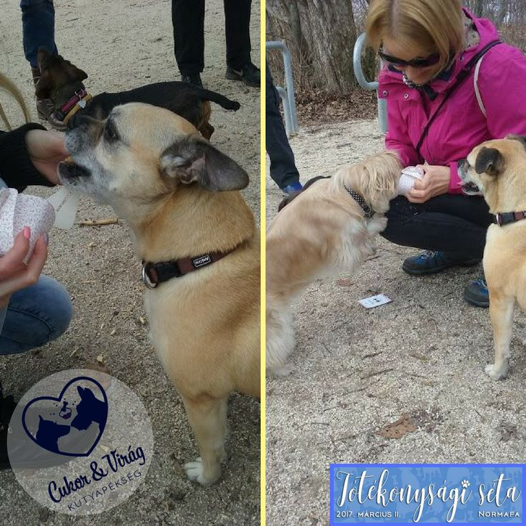 Our eager tasters at the charity dog walking event, this weekend. Lelkes kóstolóink a hétvégi jótékonysági sétán.