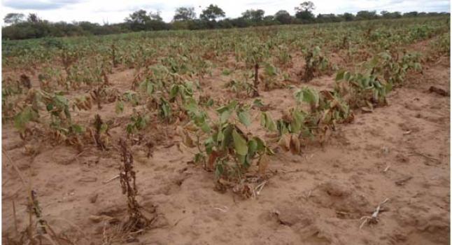 Escasez de agua en Chaco.