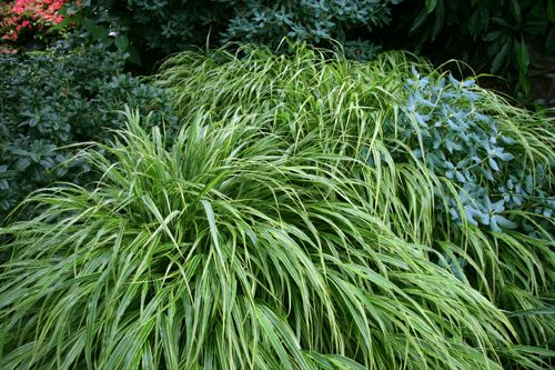 Hakonechloa macra 'Albovariegata' - grass with a beautiful flowing habit that dies back in winter but looks good for 9 months of the year.